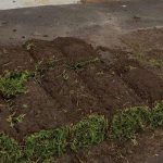 Hard Landscaping Sydney Turf Laying